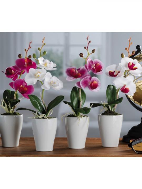 Vaso C/Orchidea 3F A4C Diam 6.5*H30