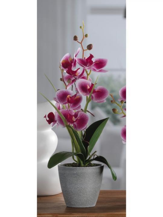 Vaso /Orchidea 7F A4C Diam 10*H38
